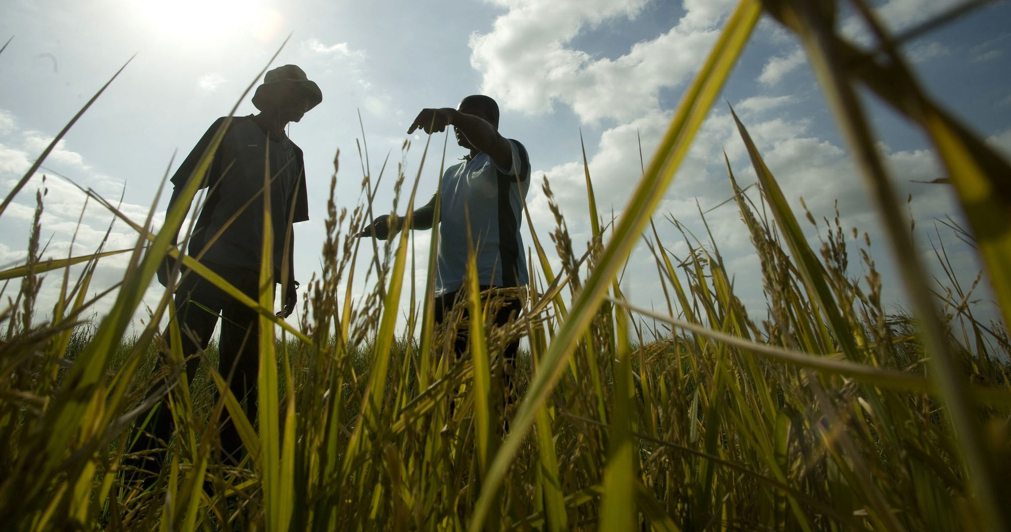 Rice plots in Mozambique (Photo: CIF Action/Flickr)