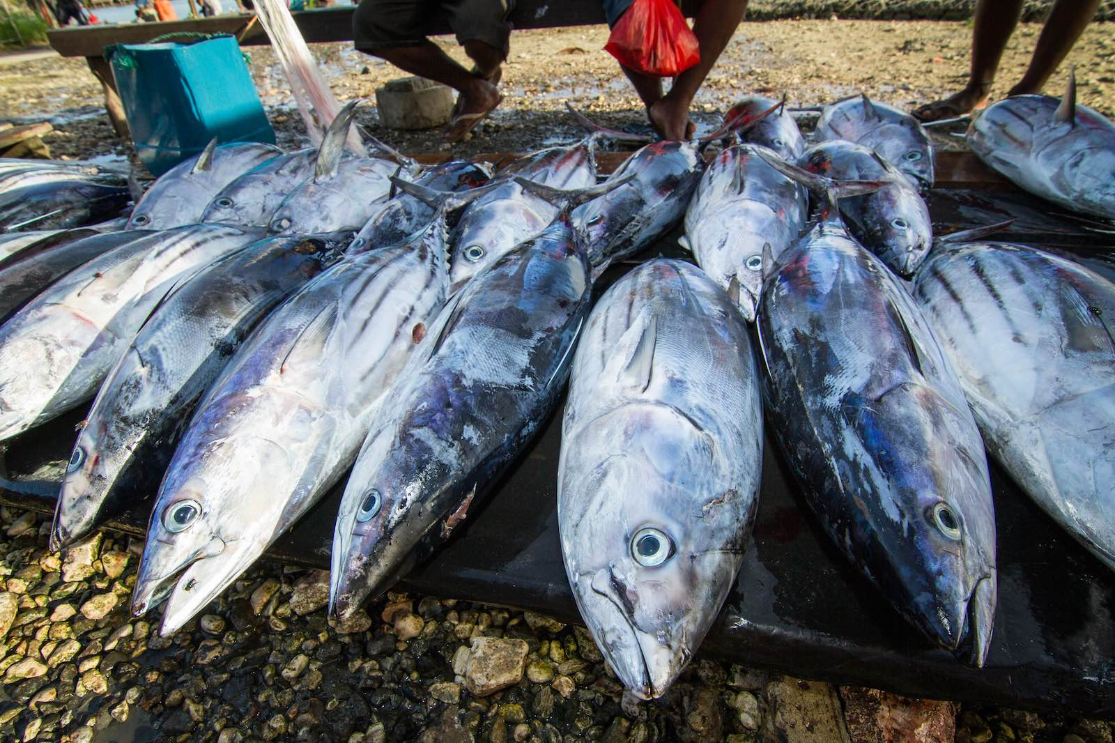 Auki market, Malaita Province, Solomon Islands (Photo: Filip Milovac/WorldFish)