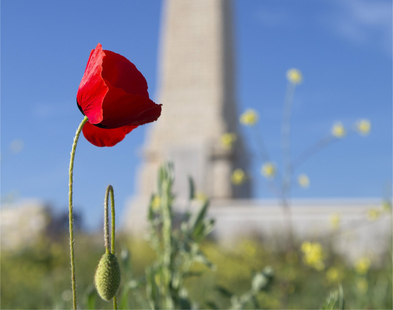 A poppy grows next to the British and Allied memorial at Cape Helles, Gallipoli (Defence Department)