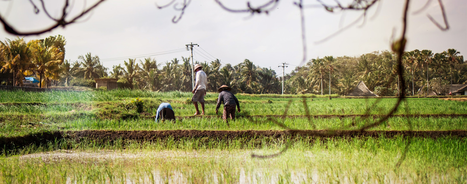 The impact of the fourth industrial revolution and oil palm plantation on rural smallholders was discussed (Photo: Artem/ Flickr)