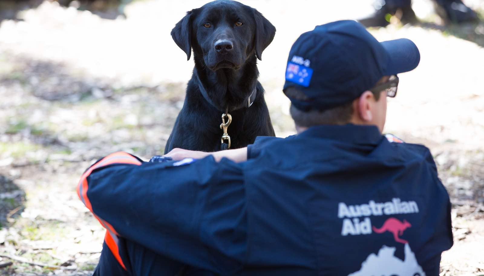 A rescue dog during a disaster response training exercise in Ingleburn, NSW (Photo: Linda Roche/DFAT)