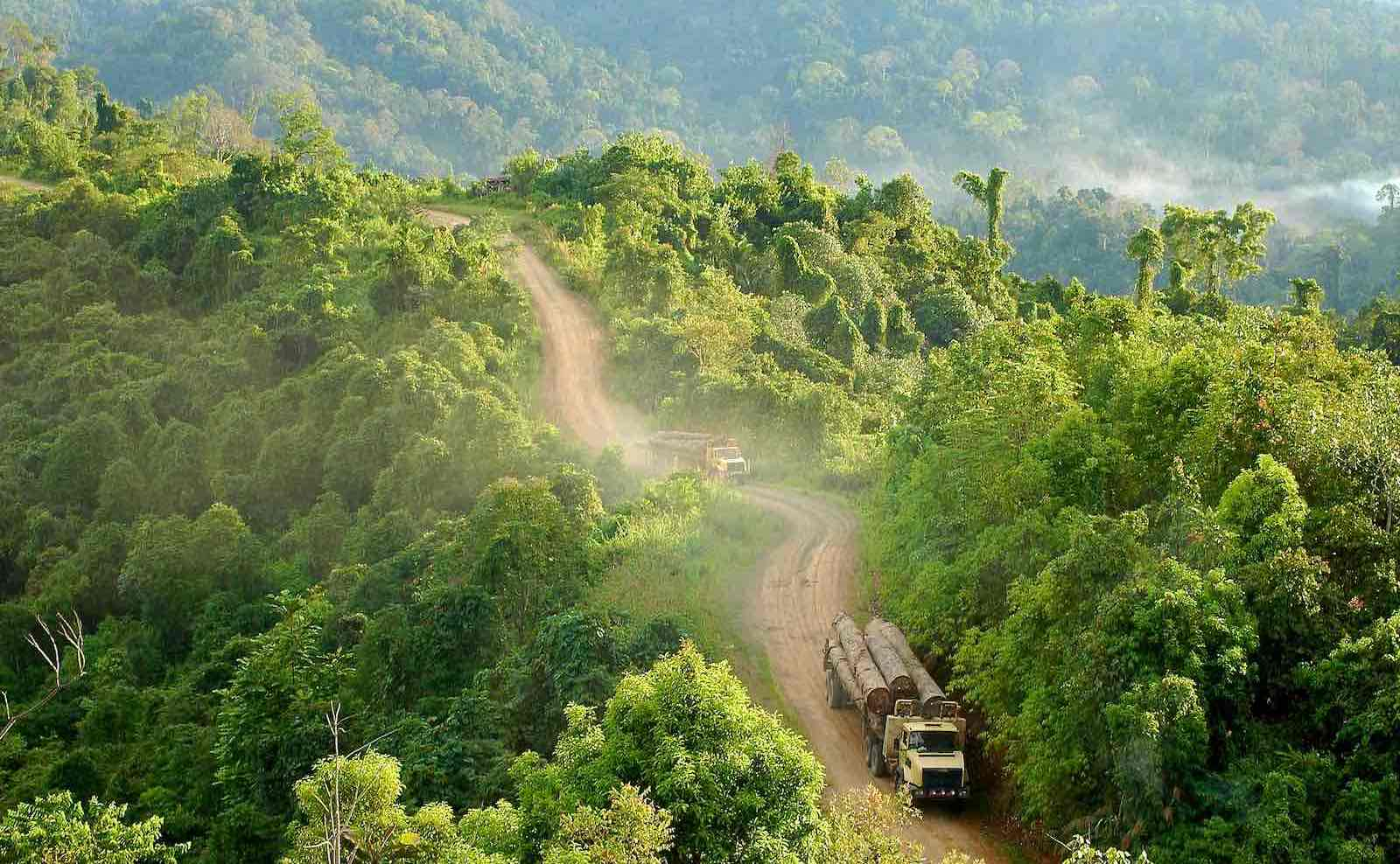 Logging trucks in East Kalimantan, Indonesia (Photo: CIFOR/Flickr)