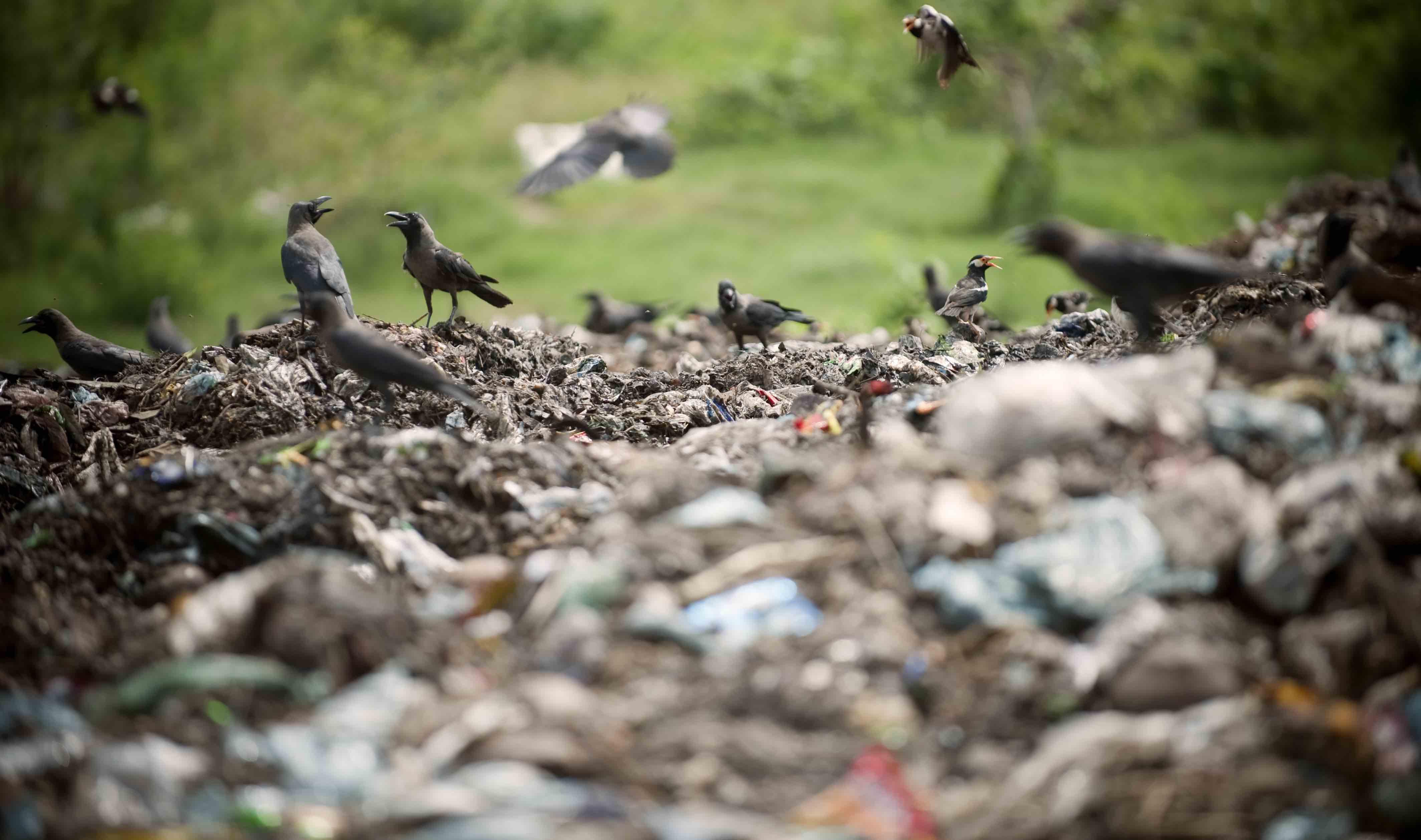 Scavenger birds pick a dump site in Dhaka (Photo: UN Photo)