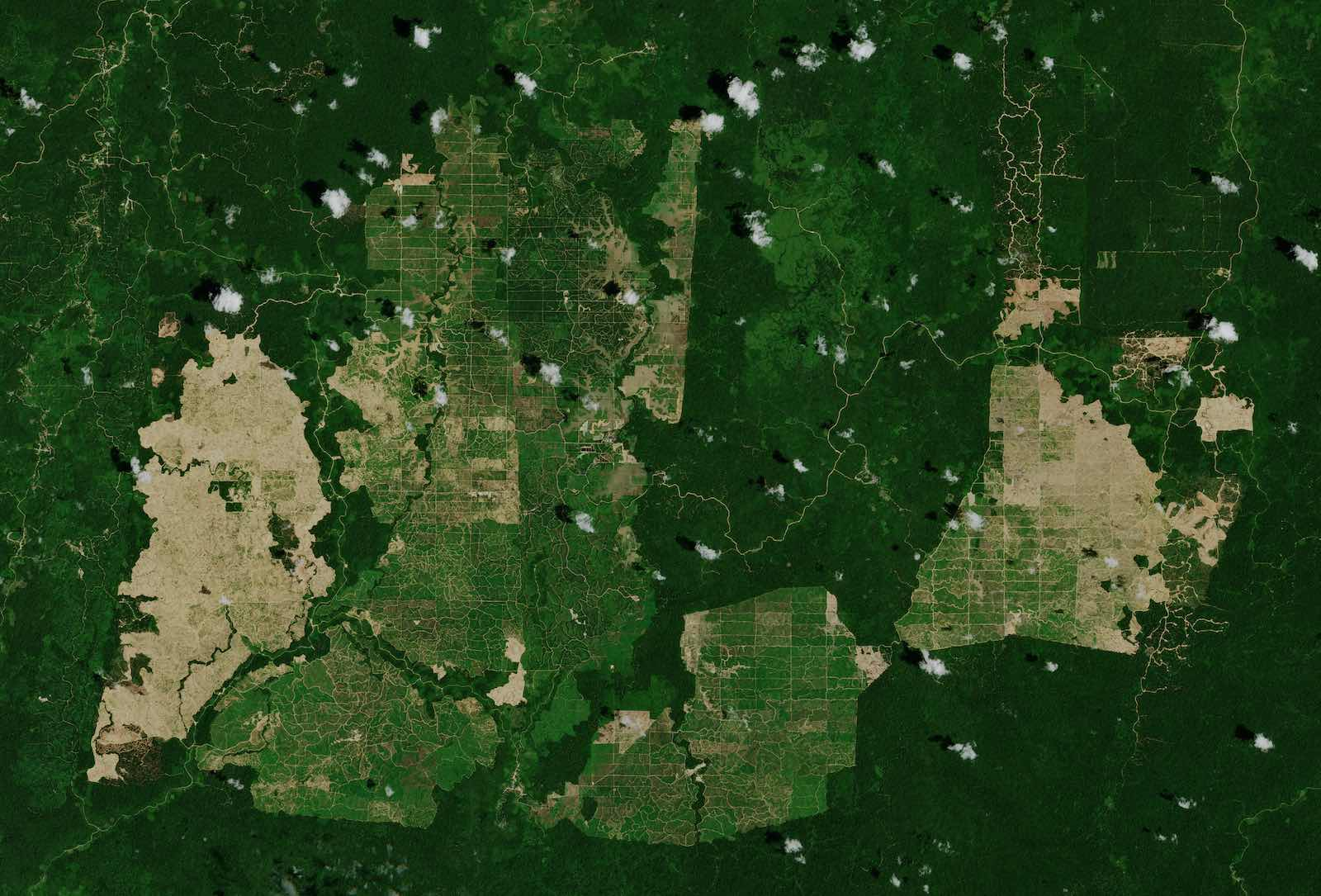 Palm oil plantations in East Kalimantan, Indonesia, seen from the Copernicus Sentinel-2 satellite (European Space Agency/Flickr)