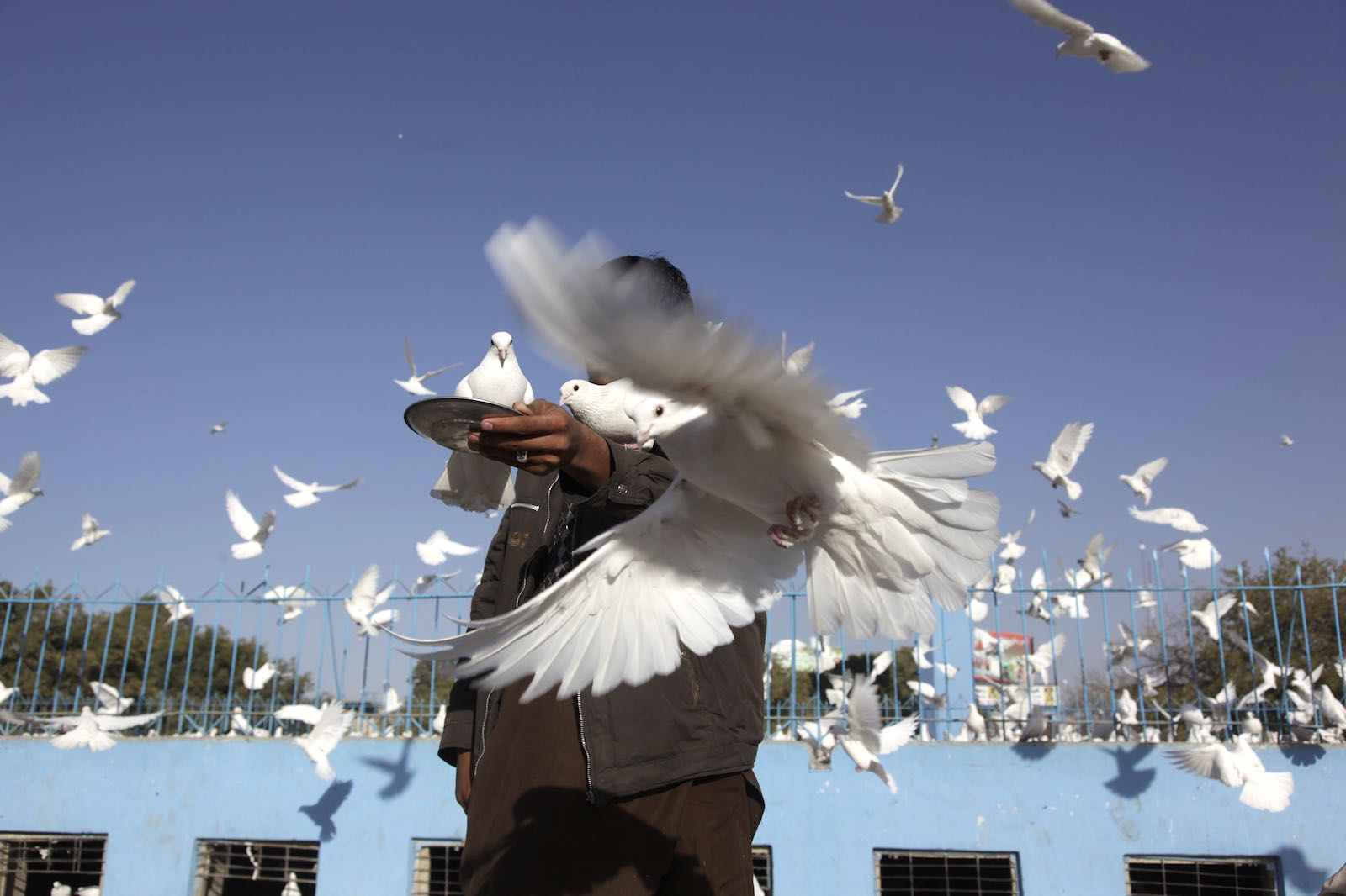 A man feeds the doves at the Imam Ali Shrine in Mazar-e Sharif, Afghanistan, 29 October 2019 (Photo: UNAMA/Flickr)