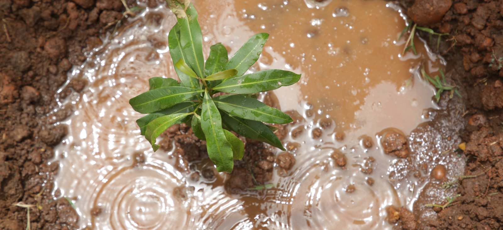 Planting carbon sinks in South Sudan (Photo: United Nations)
