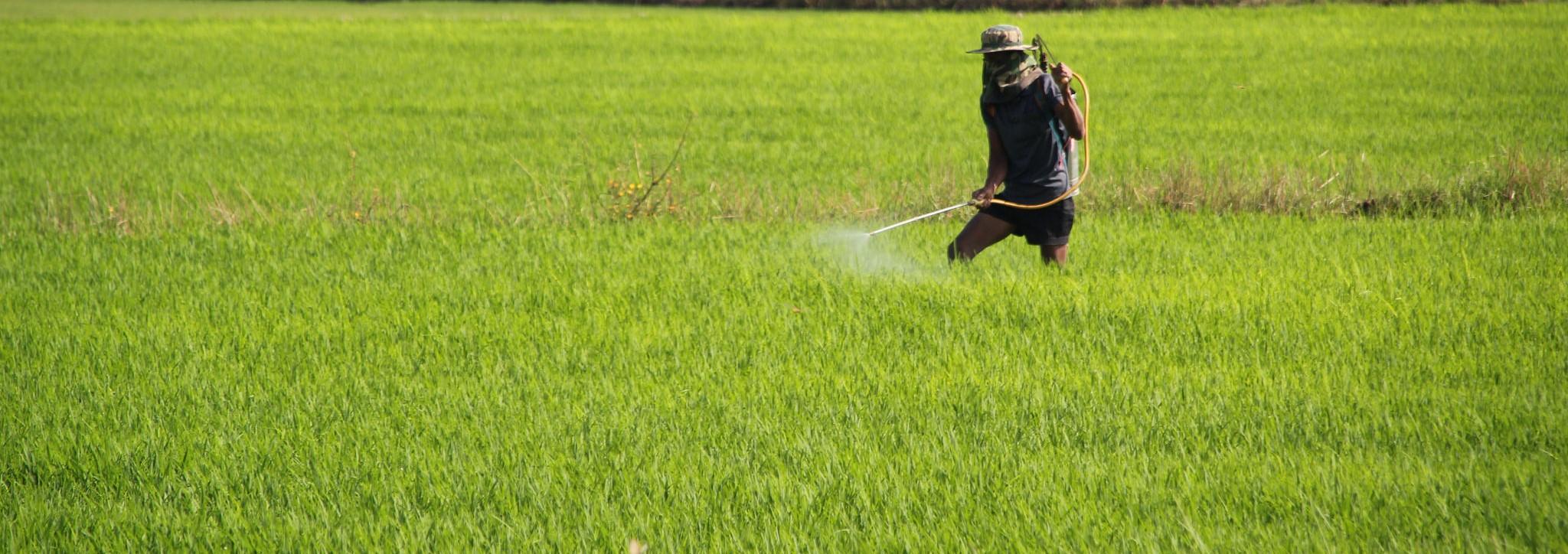 Hand spraying rice fields in Cambodia. (Photo: Chris Graham/AusAID)