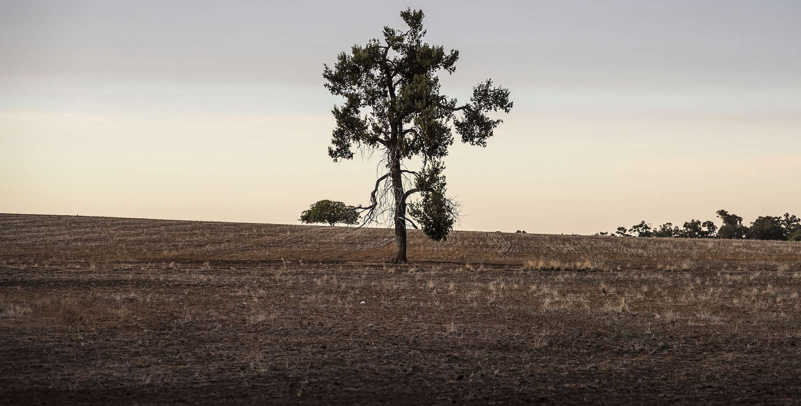 The dry lands near Coonabarabran, New South Wales, Australia, in June (Photo: Brook Mitchell/Getty)