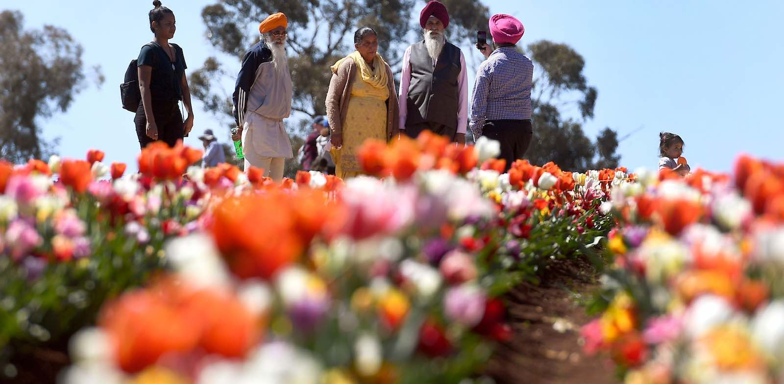 Visitors to the Tesselaar Tulip Festival at Silvan in the Dandenong Ranges on the outskirts of Melbourne, 27 September 2018 (Photo: William West via Getty)