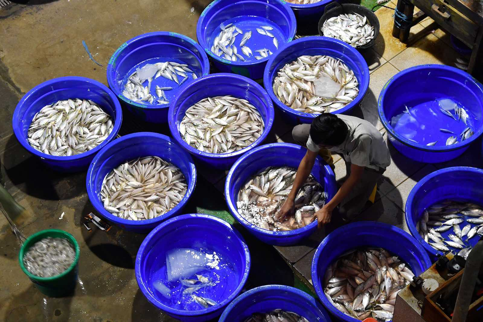 Muara Baru fish market in Jakarta (Photo: Adek Berry/AFP/Getty Images)