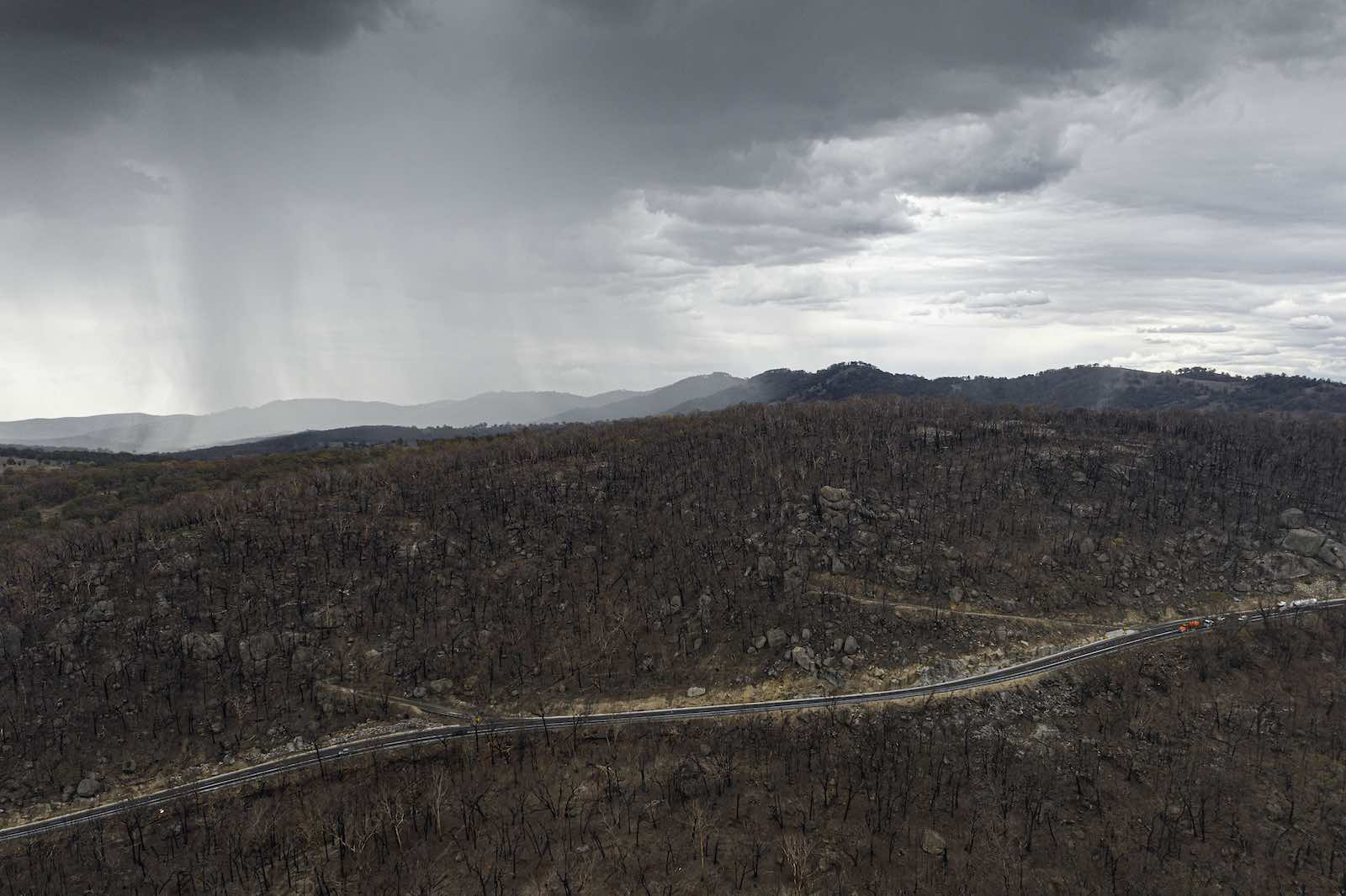 Rain soaks blackened forest in New South Wales, Australia (Photo: Brook Mitchell/Getty Images)