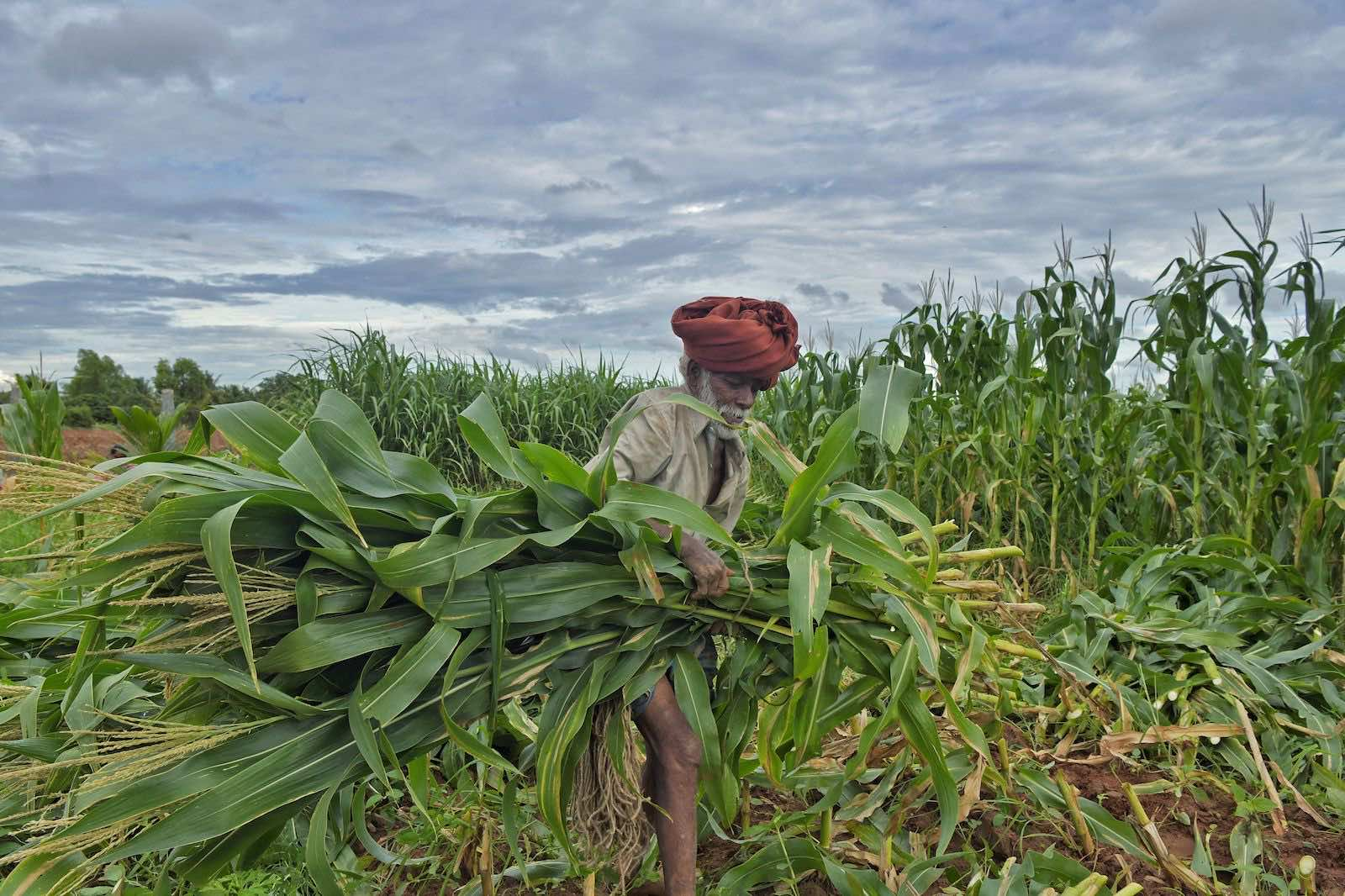 Agriculture market access is Australia's highest priority in trade deal negotiations, but India has been unwilling to make concessions (Manjunath Kiran/AFP via Getty Images)