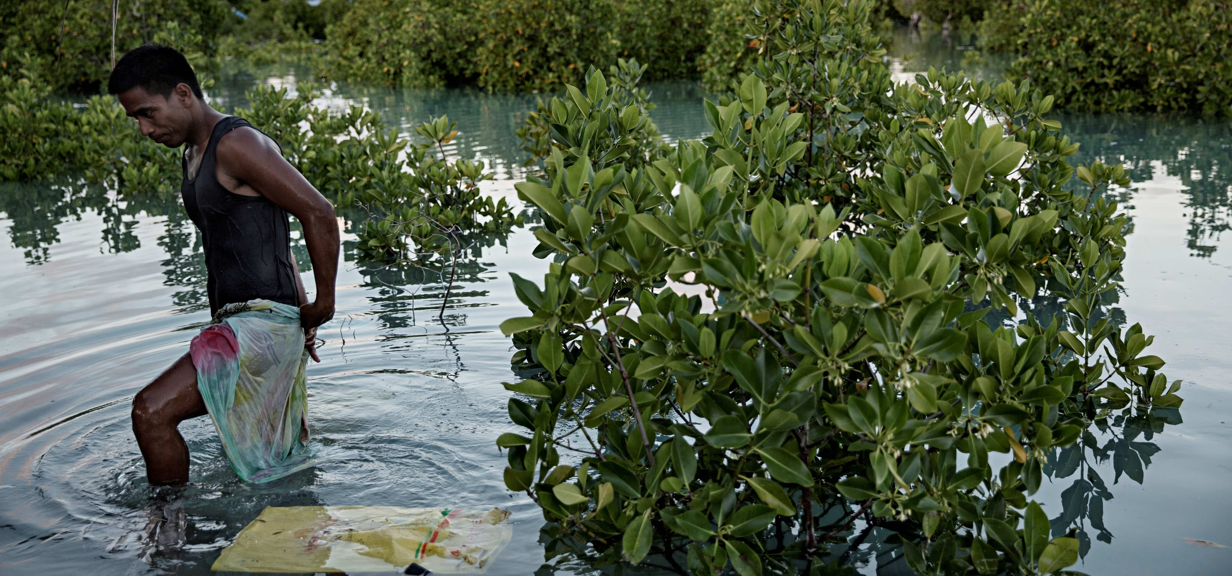 A flooded mangrove forest in Kiribati, September 2015 (Photo: Jonas Gratzer/Getty Images)