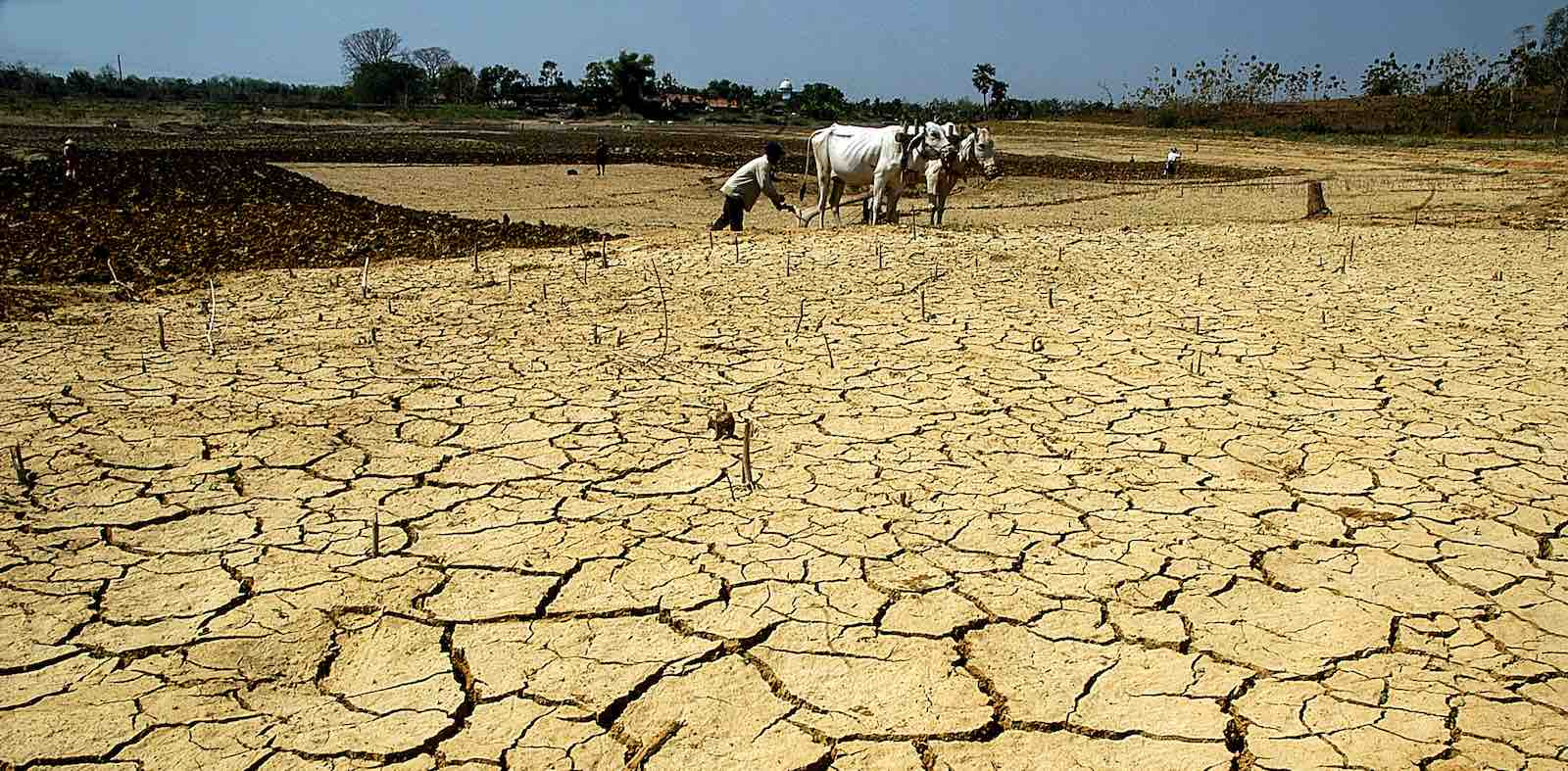 A farmer works a dried-out field in Central Java, Indonesia (Photo: Wf Sihardian via Getty)