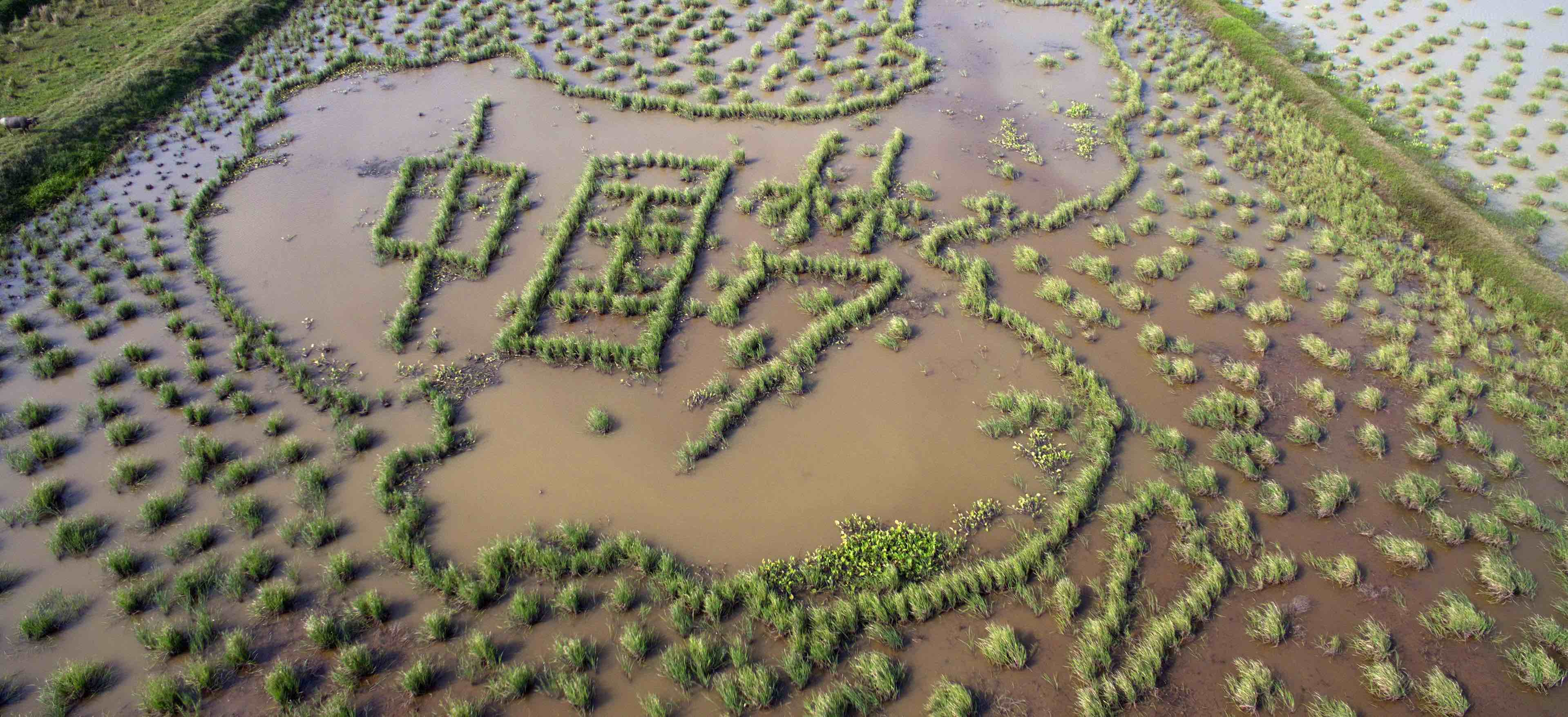 """Characters meaning """"Chinese Dream"""" grow in a paddy field in Hainan province, 2016 (Photo: VCG via Getty)"""