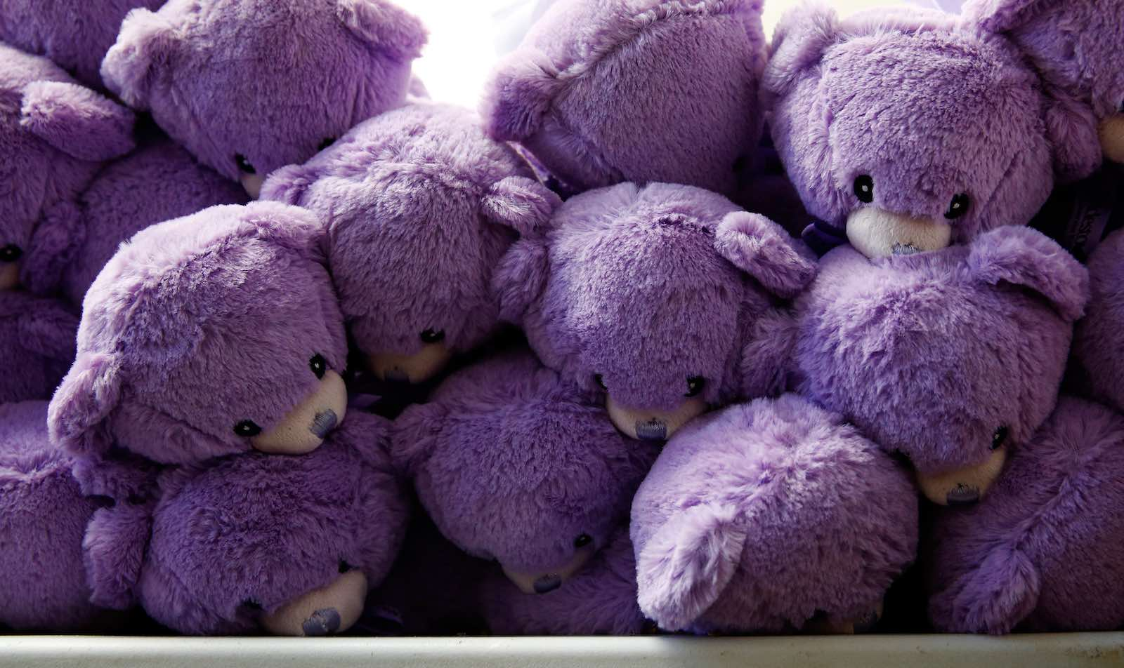 Lavender-stuffed teddy bears from Tasmania in Australia found a huge market in China (Photo: Brendon Thorne via Getty)