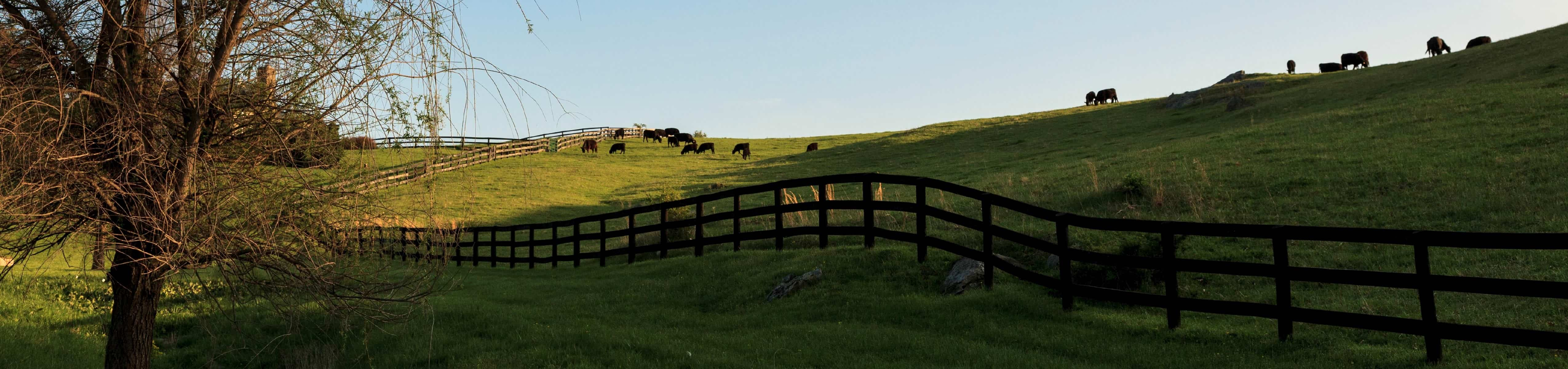 Cattle grazing in Virginia (Photo: Jumping Rocks/UIG via Getty Images)