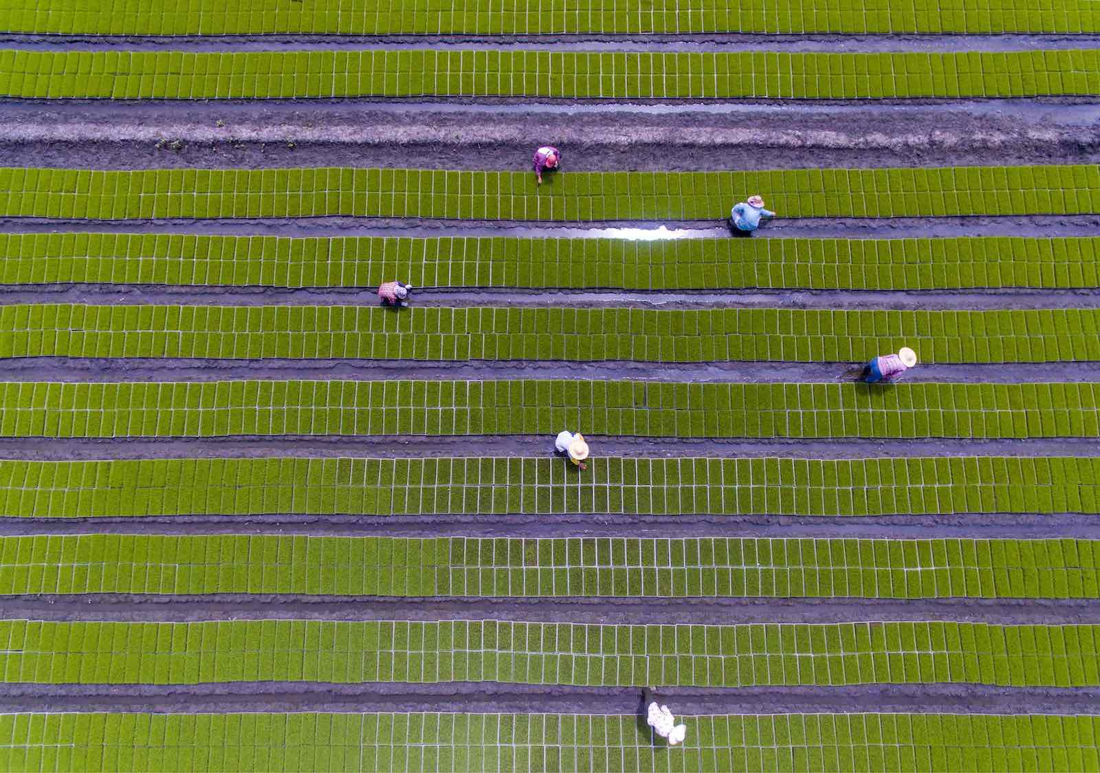 The harvest in June, Jiangsu, China (Photo: TPG/Getty)