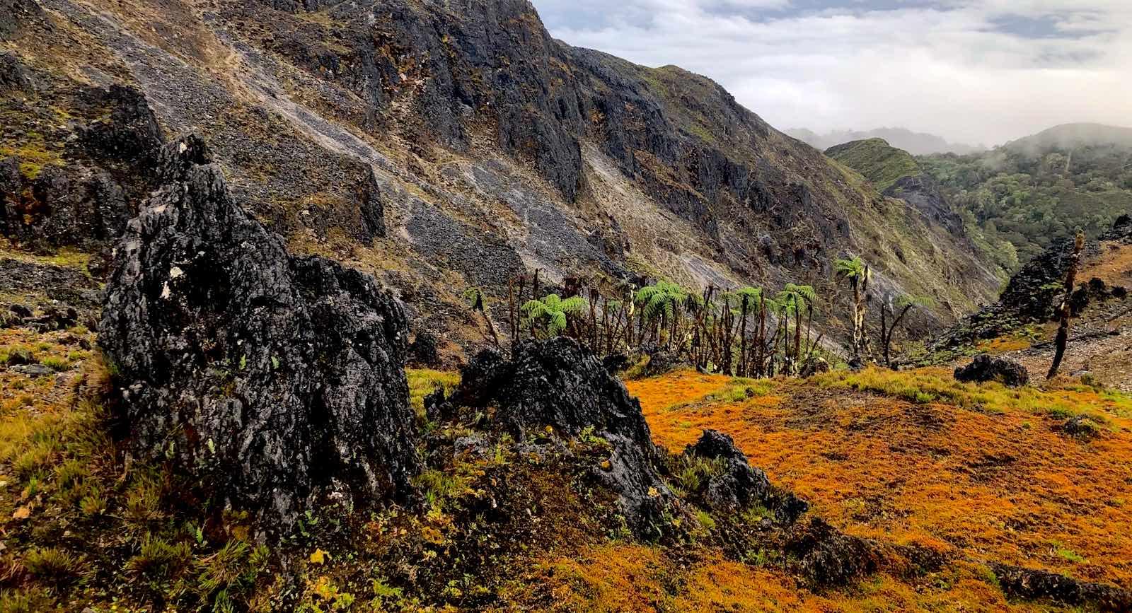 Near the peak of Gunung Binaiya, Seram, Indonesia (Caroline Scott)