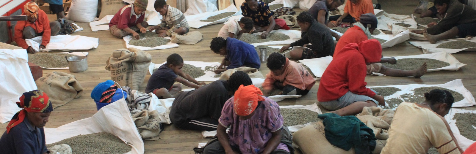 Hand-sorting coffee beans at the Baroida coffee plantation in PNG (Photo: Flickr/counterculturecoffee)