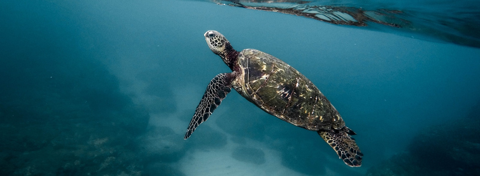 Chinese fishers have begun illegally harvesting sea turtles. (Photo: Jeremy Bishop/ unsplash)