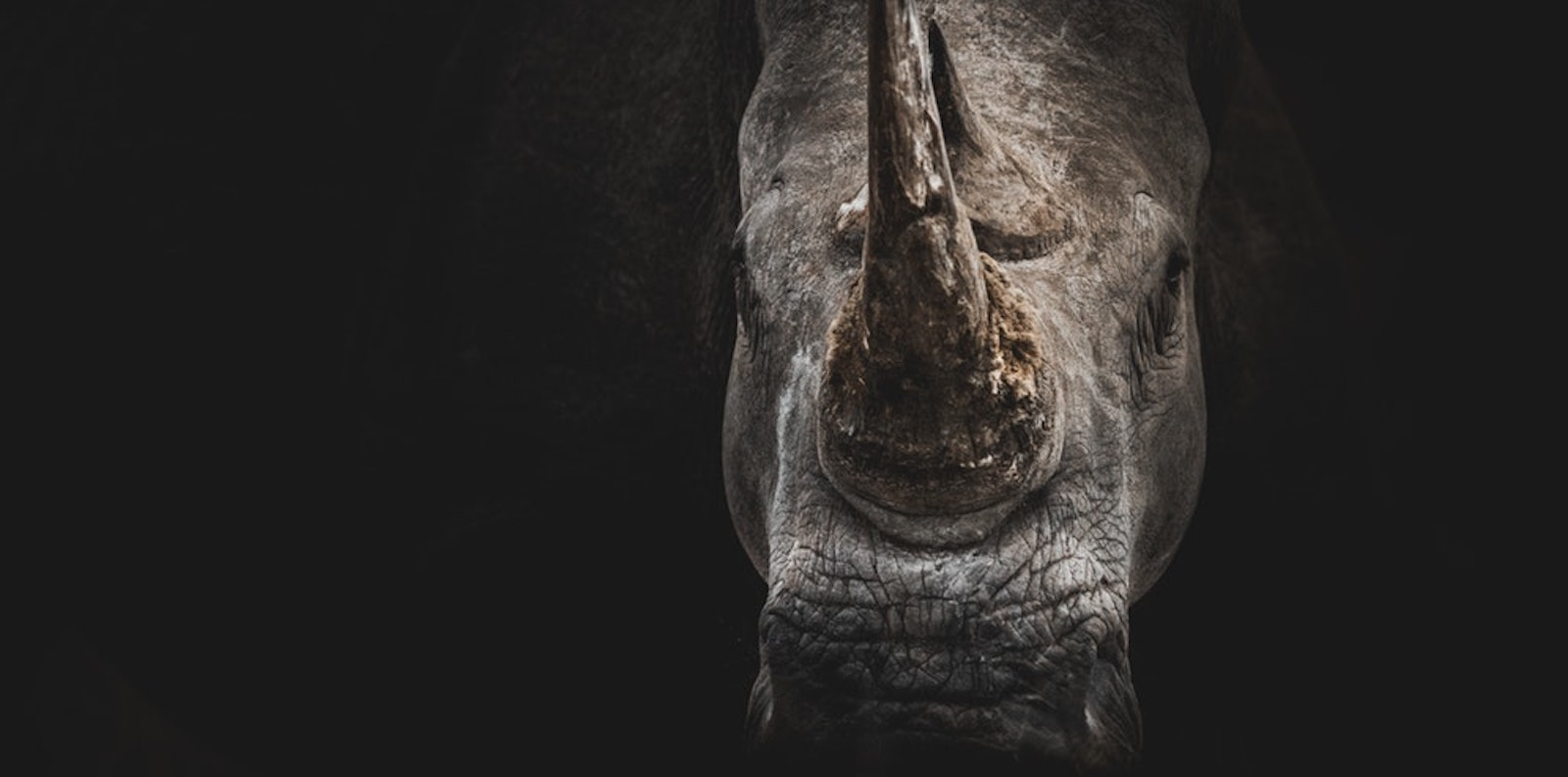 President Xi Jinping warned hundreds of top Communist Party officials that China must be on the alert against black swans and grey rhinos. (Photo: Geran de Klerk/ unsplash)